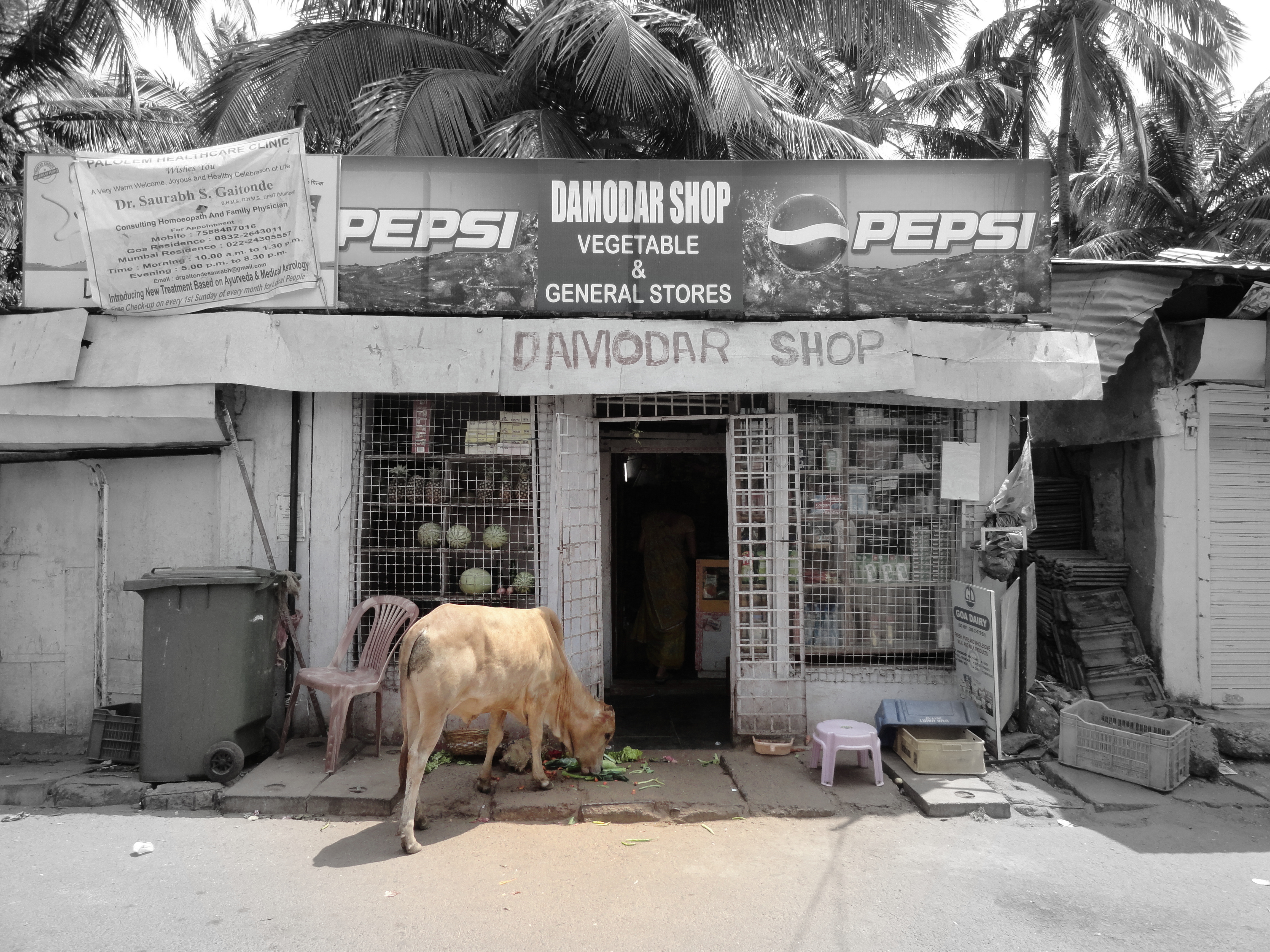 India's cow dilema