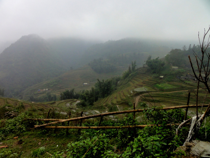 Rice Terraces in Sapa