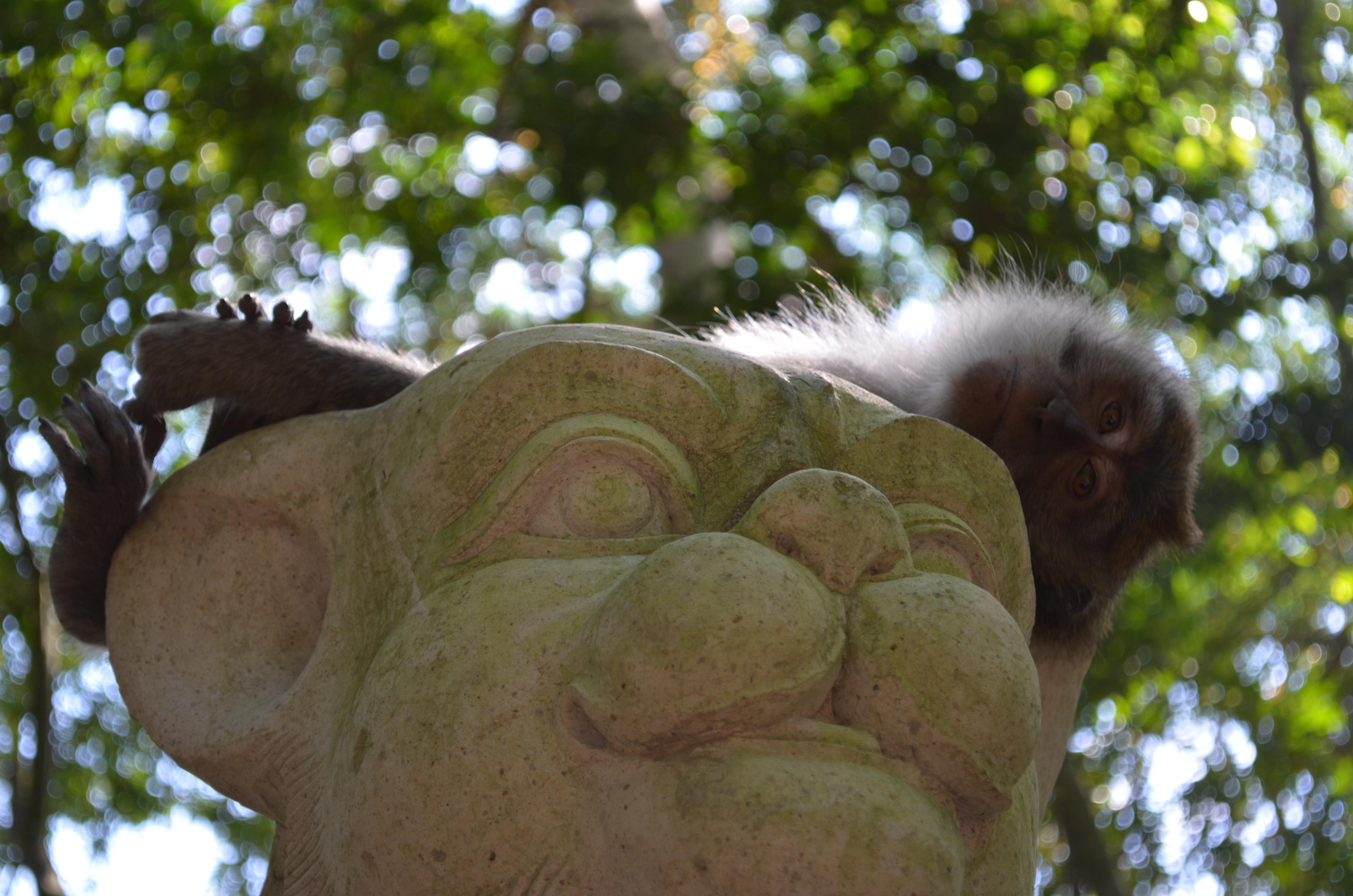 Balie Monkey