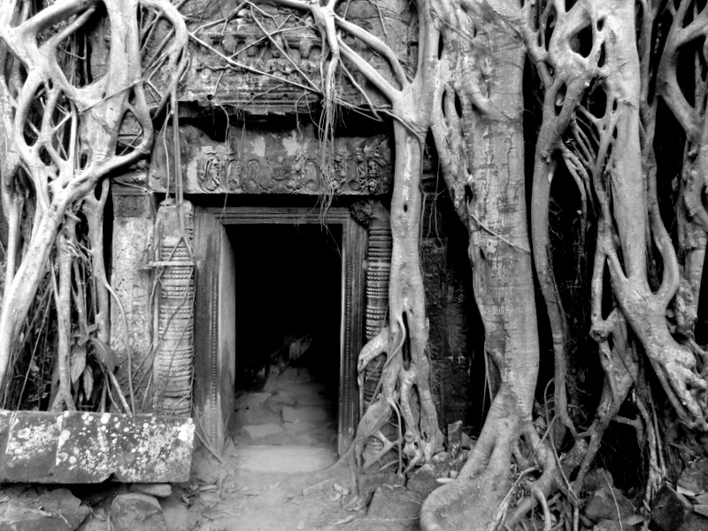 Roots over door in Angkor Wat, Cambodia.