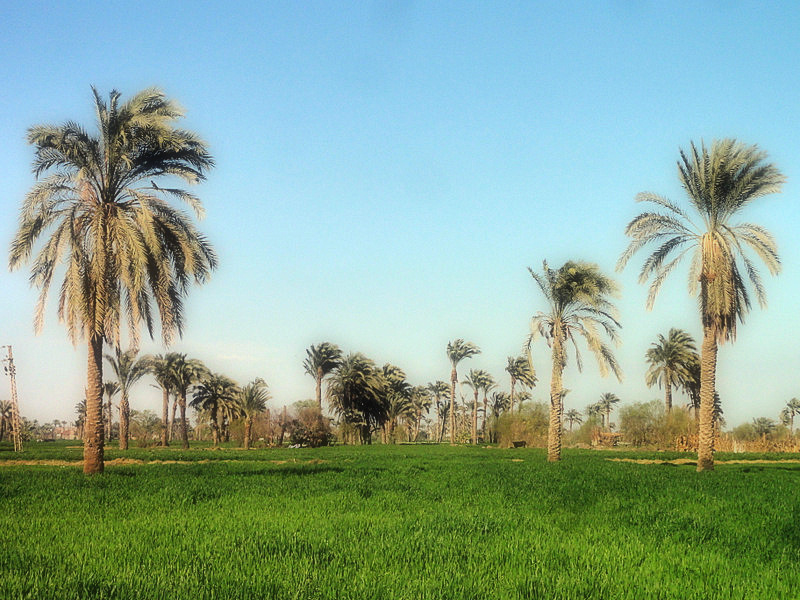 Beni Suif, Egypt