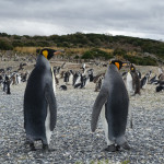 Visiting Penguins at the end of the world in photo!!!