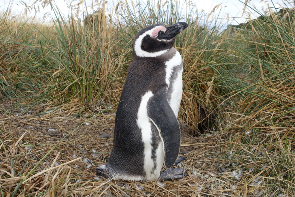 Penguin tour in Patagonia